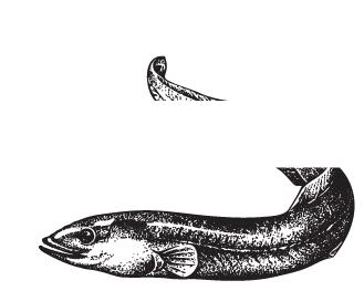 Palingkwekerij en rokerij Bardoel | Wanroij